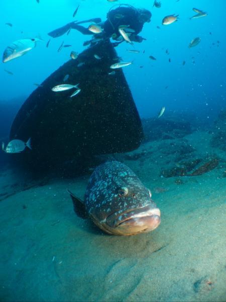 diving.DE Lanzarote,Puerteo del Carmen,Lanzarote,Kanarische Inseln,Spanien