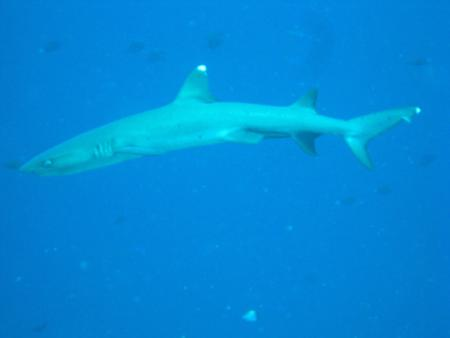 Blue Corner,Palau