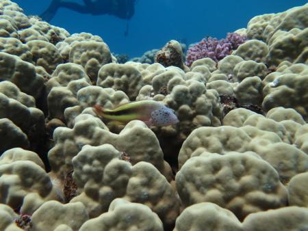 Extra Divers Ghalib,Port Ghalib,El Quseir bis Port Ghalib,Ägypten