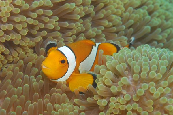 Bali Nordküste 2012, Bali Nordküste,Indonesien