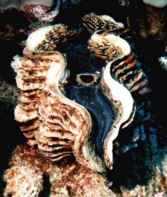 El Quseir, El Quseir - allgemein,Ägypten
