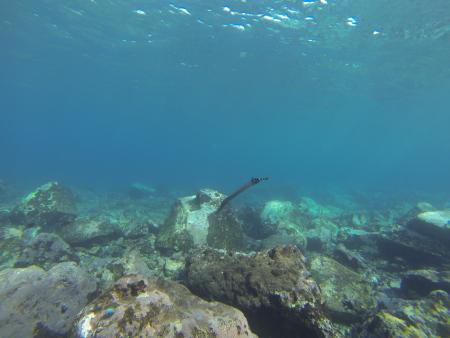 La Palma,Hausriff La Palma Diving Cente,Spanien