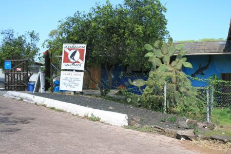 Scuba Iguana,Puerto Ayora,Santa Cruz,Galapagos,Ecuador