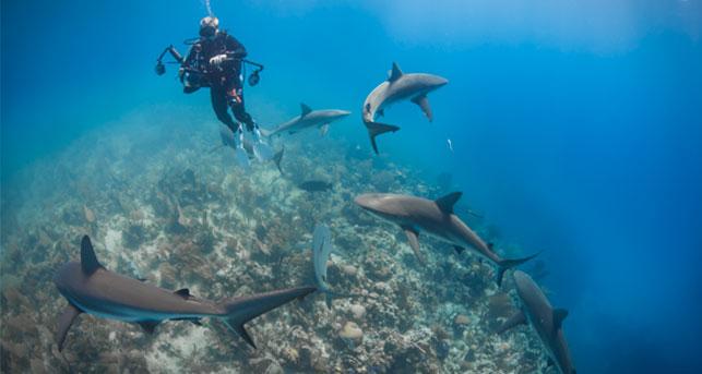 reef sharks, Jardines de la reina, cuba, reef sharks, fish & trips gmbh, Österreich