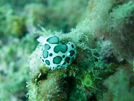 Hammersea Diving Company Javea,Festland,Spanien