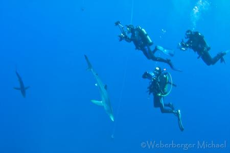 Pico Sport Scuba Diving & Whale Watching,Portugal
