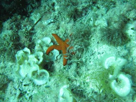 Diving Cala Millor,Mallorca,Balearen,Spanien
