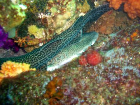 Pro Dive,Port Elizabeth,Südafrika