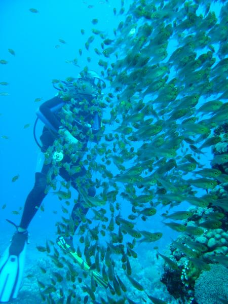 Umbaraks Shark Bay Diving Club,Sharm el Sheikh,Sinai-Süd bis Nabq,Ägypten