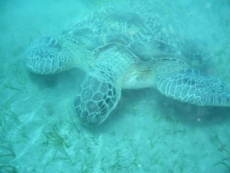 Global Divers Marsa Alam,Marsa Alam und südlich,Ägypten