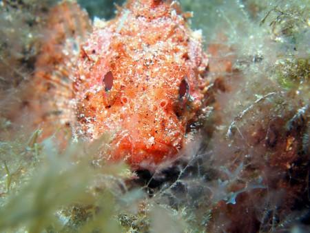 Ecological Divers,Kanarische Inseln,Spanien
