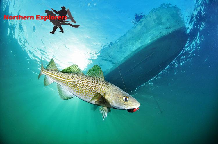 Natur unter und über Wasser, Wracks und Abenteuer, Namsfjord/Mittelnorwegen,Norwegen