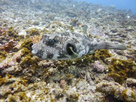 Gangga Divers Candidasa Bali,Bali Insel Menjangan,Bali,Indonesien