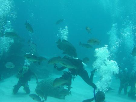 Spirit of freedom,Cairns,Australien