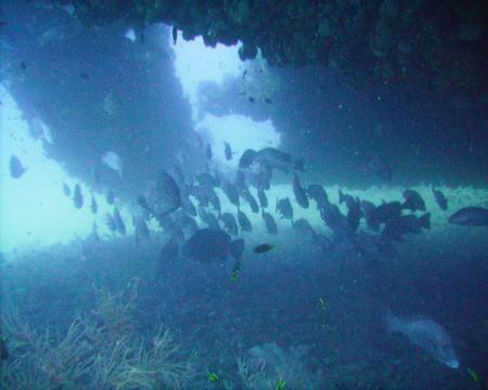 S.S.Yongala (Yongala Wreck),Australien