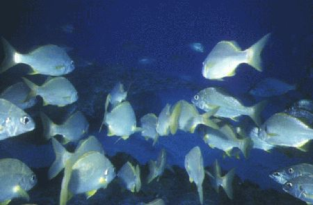 Aquanautic Dive Center Tenerife (ex Barakuda ),Adeje,Teneriffa,Kanarische Inseln,Spanien