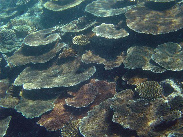 Ovalau, Ovalau,Fidschi