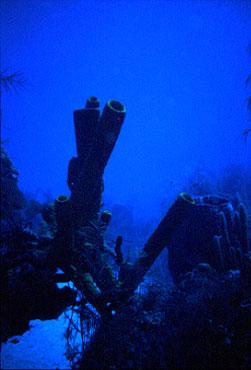 Blue Hole / Halfmoon Caye, Blue Hole / Halfmoon Caye,Belize