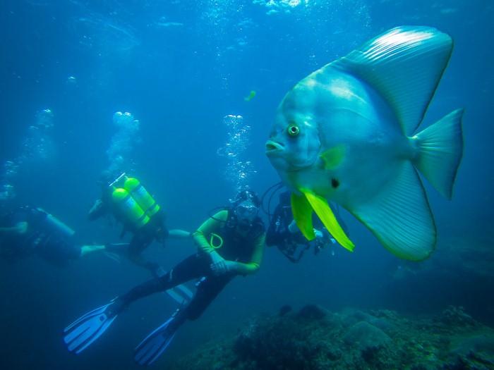 Musandam Oman Underwater, Al Marsa, Musandam, Oman