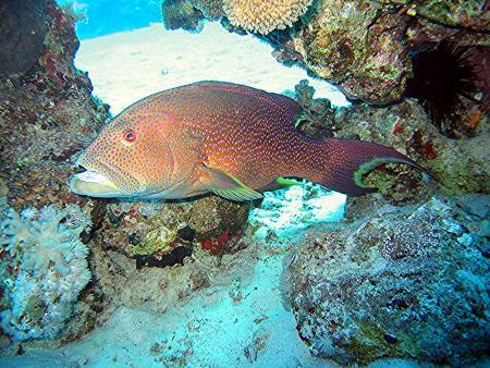 Extra Divers,Makadi Bay,Safaga,Ägypten