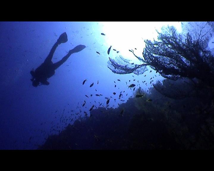 Taucher mit Korallen im Gegenlicht