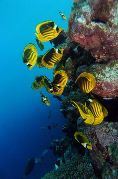 Ras Mohamed - Reef life, Wrack der Jolanda,Ras Mohammed,Ägypten