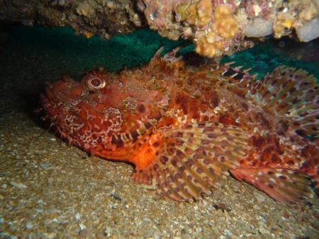 Diving-Martin,Javea,Festland,Spanien