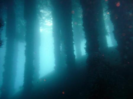 Easy Diving,Zamboanguita,Negros,Philippinen
