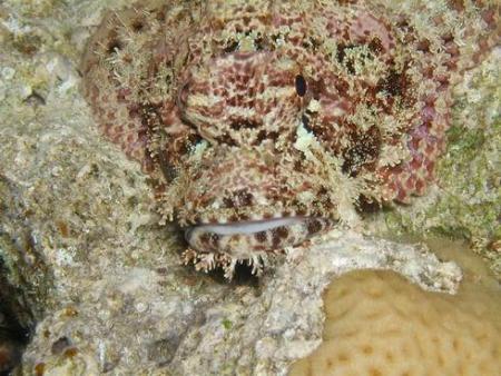 Orca Dive Center Hamata,Zabargad,Marsa Alam und südlich,Ägypten