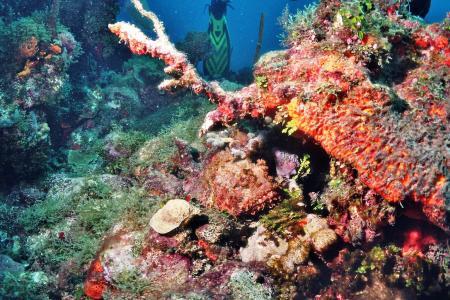 Neptuno,Playa Bavaro,Dominikanische Republik