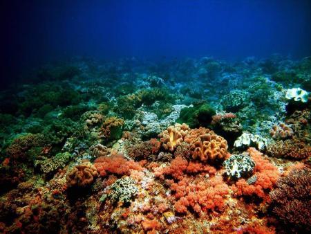 Coco White Beach Resort,Basdio Guindulman,Bohol,Paradise Garden,Bohol Hauptinsel,Philippinen