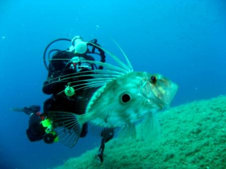 Nautilus Diving Center,Palau (Sardinien),Sardinien,Italien
