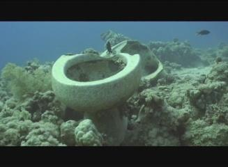 Venta Diving Sharm el Sheikh,Sinai-Süd bis Nabq,Ägypten