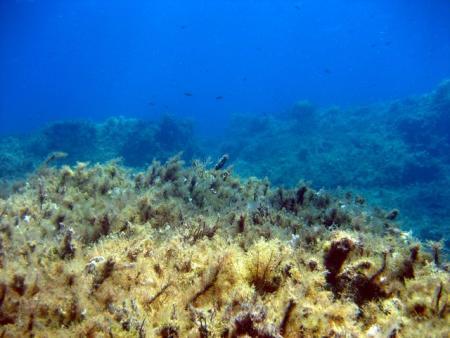 Pistole Bay,Coral Bay,Zypern