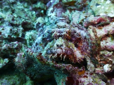 Raja Laut,Sulawesi,Indonesien