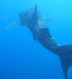 African Dive Adventures,Inhambane,Mosambik