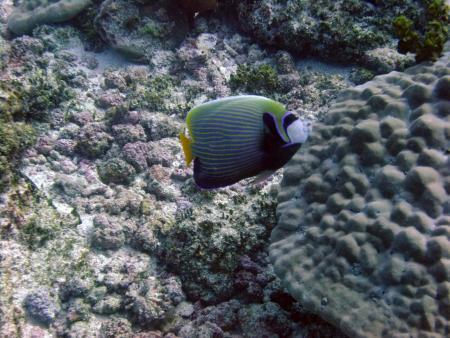 Buccaneer Diving,Zanzibar,Tansania