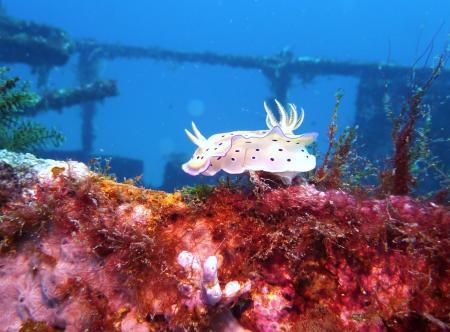 Enjoy Diving by Guido Busch,Puerto Galera,Philippinen