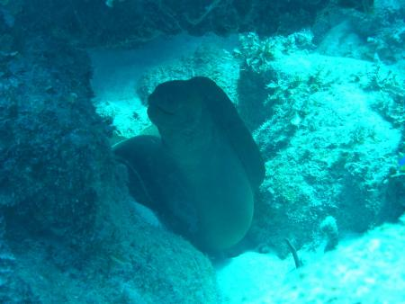 Cuba-Divers,Cayo Guillermo,Kuba