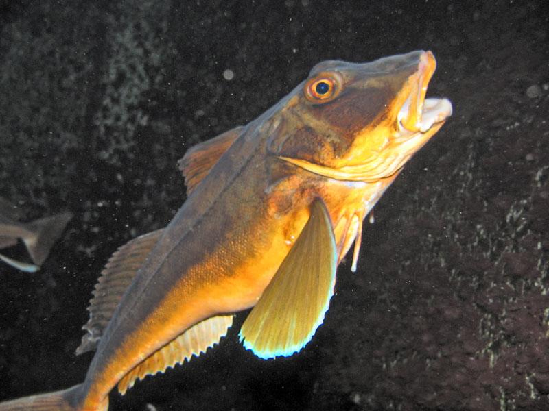 Ostsee und Kieler Aquarium, Ostsee allgemein,Schleswig-Holstein,Deutschland,Schleswig Holstein
