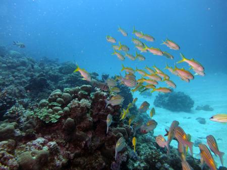 Angel dive Ltd - Centara Poste Lafayette Resort & Spa,Poste Lafayette,Mauritius