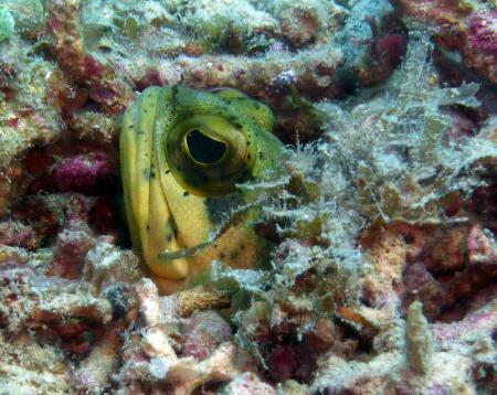 Cooper´s Honda Bay Diving,Palawan,Puerto Princesa,Honda Bay,Philippinen