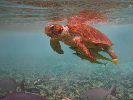Chuck & Robbie´s,San Pedro,Ambergris Caye,Belize