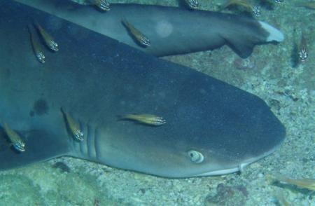 Mahe,Beau Vallon,Shark Bank,Seychellen