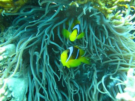 Dinos Diving Center & Safari,Hurghada,Ägypten