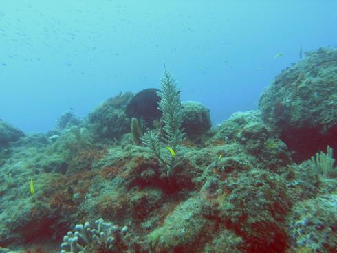 Dragon Bay, Marine Park, Dragon Bay,Marine Park,Grenada