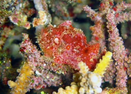 Gangga Island Dive Resort,North Sulawesi,Sulawesi,Indonesien