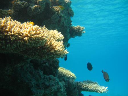 Deep Blue Divers,Hurghada,Ägypten