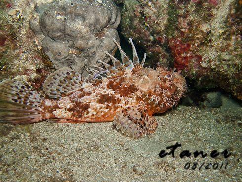 natürlich wieder mit diving.de, Insel Cres,Kroatien