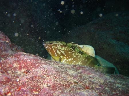 Extra Divers Malta,Malta